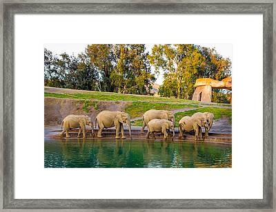 Elephants Are Family Framed Print by April Reppucci
