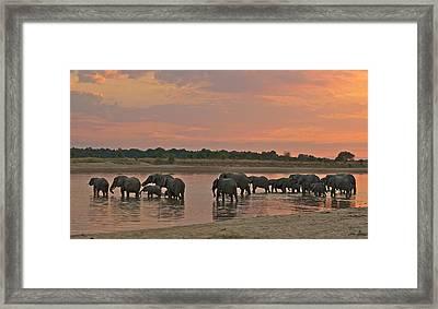 Elephants At Dusk Framed Print by Johan Elzenga