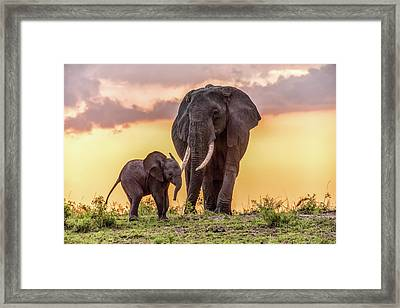 Elephants At Sunset Framed Print by Janis Knight
