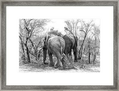 Elephants Black And White Framed Print by Jane Rix