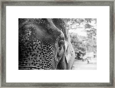 Framed Print featuring the photograph Elephant's Eye by Dean Harte