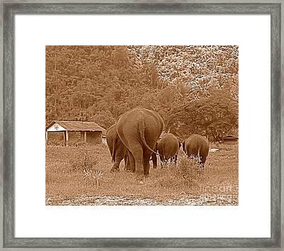 Elephants II Framed Print by Louise Fahy