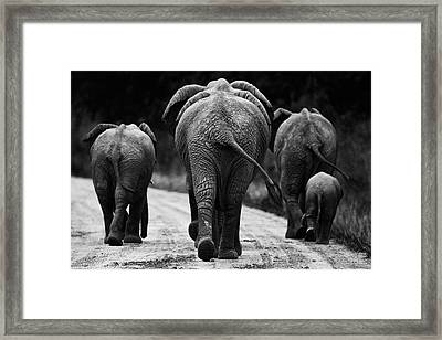 Elephants In Black And White Framed Print
