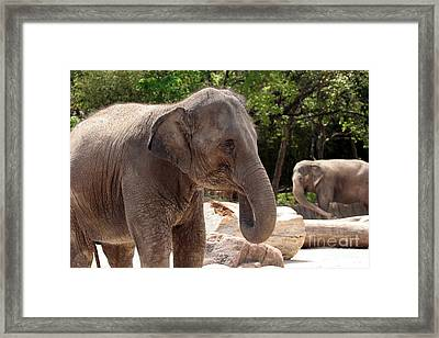 Elephants Framed Print by Jeannie Burleson