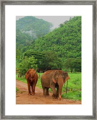 Elephants Framed Print by Louise Fahy