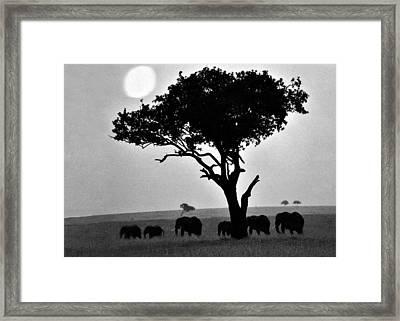 Elephants Under A Tree Framed Print