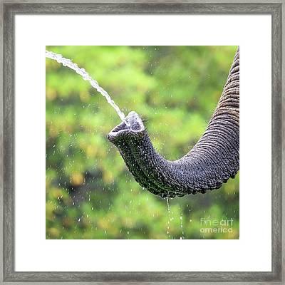 Elephant Taking A Drink Framed Print by Jane Rix