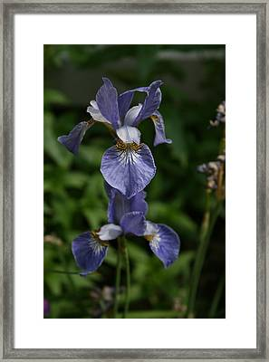 Elevated Iris Framed Print by Alan Rutherford