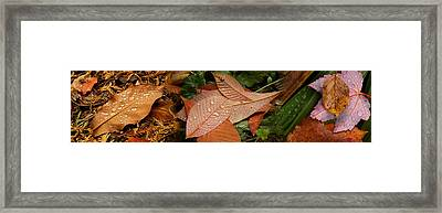 Elevated View Of Raindrops On Leaves Framed Print