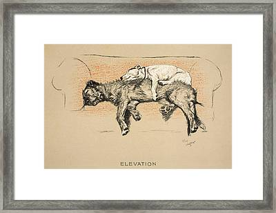 Elevation Framed Print by Cecil Charles Windsor Aldin