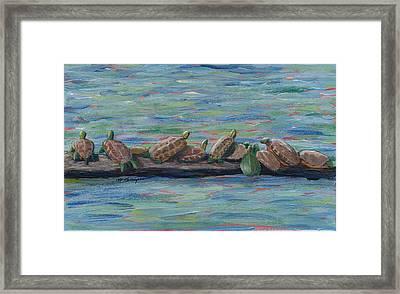 Eleven Turtles Framed Print