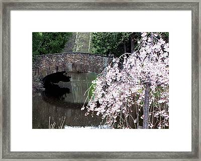 Elizabeth Bridge And Cherry Blossoms Framed Print by Leonard Rosenfield