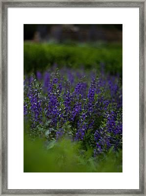 Elizabethan Gardens Framed Print