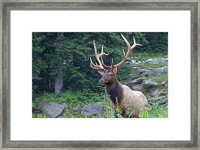 Framed Print featuring the photograph Elk 4 by Gary Lengyel