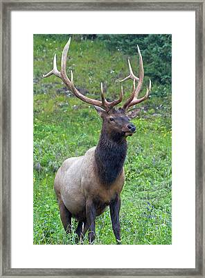 Framed Print featuring the photograph Elk 5 by Gary Lengyel