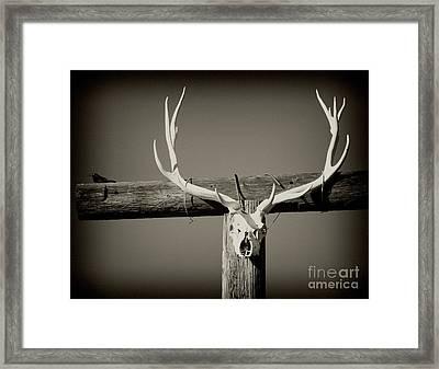 Elk And Blackbird Ranch Gate Framed Print by Gus McCrea