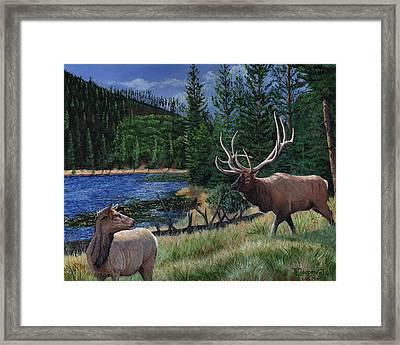 Elk At Beaver Lake  Yellowstone Framed Print