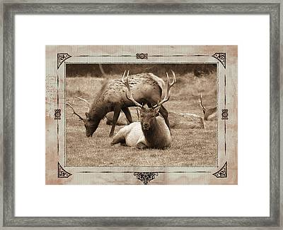 Framed Print featuring the photograph Elk by Athala Carole Bruckner