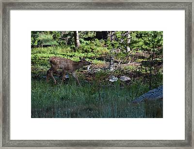 Baby Elk Rmnp Co Framed Print