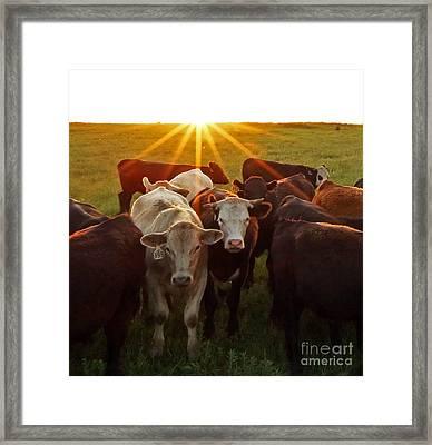 Elk County Herd Framed Print