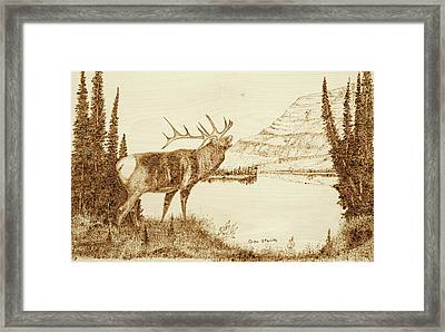 Elk Framed Print by Glen Stanley