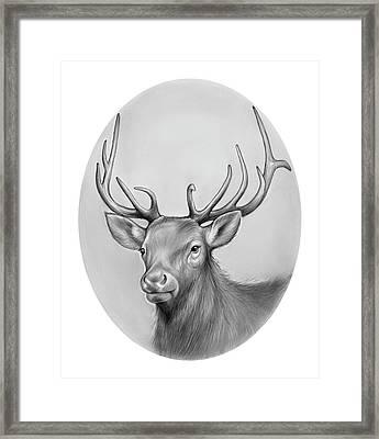Elk Framed Print by Greg Joens