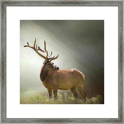 Framed Print featuring the photograph Elk In Suns Rays by David and Carol Kelly