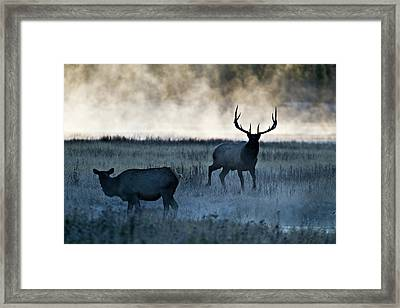 Elk In The Mist Framed Print