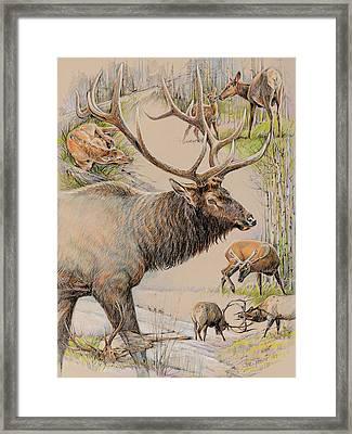 Elk Lifescape Framed Print by Steve Spencer