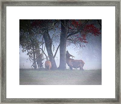 Elk Neck Scratch Framed Print