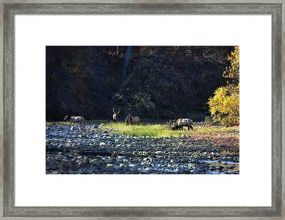 Framed Print featuring the photograph Elk River Crossing At Sunrise by Michael Dougherty