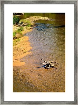 Elk River Driftwood Framed Print