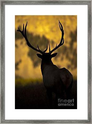 Elk Silhouette Framed Print by Wildlife Fine Art