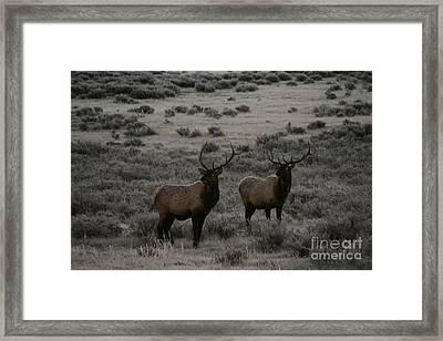 Elk Watching People Framed Print by Robert Torkomian
