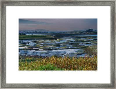 Elkhorn Slough Framed Print by Bill Roberts