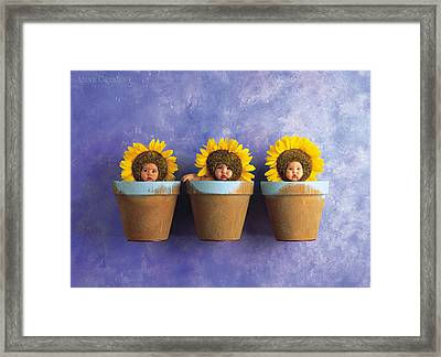 Ellecia, Jayson And Tyla Framed Print by Anne Geddes