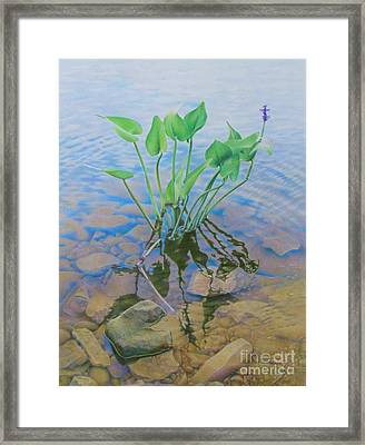 Ellie's Touch Framed Print by Pamela Clements