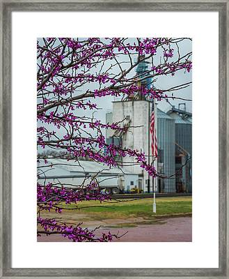 Framed Print featuring the photograph Ellsworth Blooms by Darren White