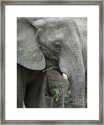 Elly At Lunch Framed Print by Karol Livote