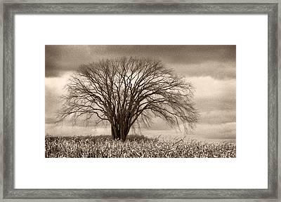 Elm Fortress Framed Print by Jill Love