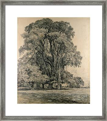 Elm Trees In Old Hall Park Framed Print by John Constable
