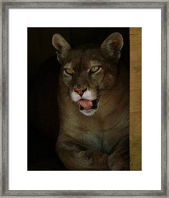 Elmira's Panther Framed Print by Kimberly Camacho