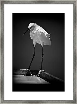 Elongated Grace Framed Print