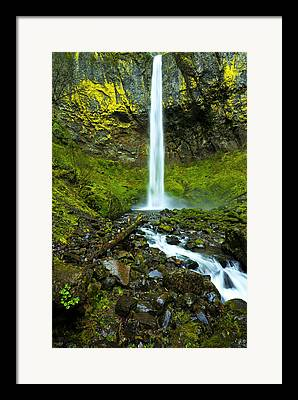 Lichens Framed Prints