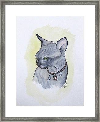 Else The Sphynx Kitten Framed Print