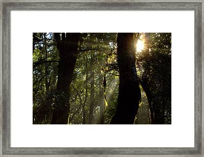 Elven Forest Framed Print by Robb Muir