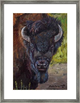Elvis The Bison Framed Print