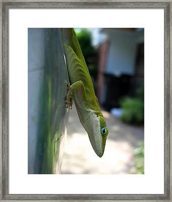Emaciated Lizard Framed Print by Lindsey Orlando