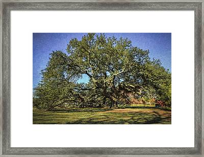 Emancipation Oak Tree Framed Print