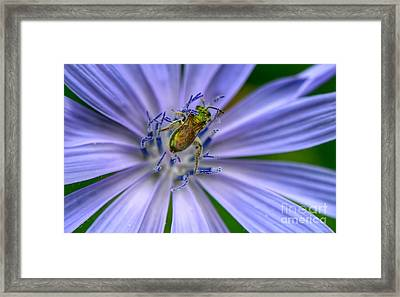 Embraced Framed Print
